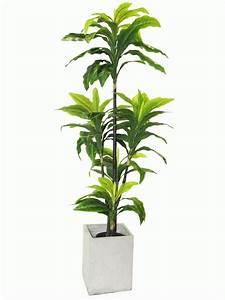 Newturf, Solutions, Newturf, Introduce, Indoor, Plants
