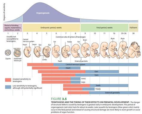 fertility pregnancy expecting parents