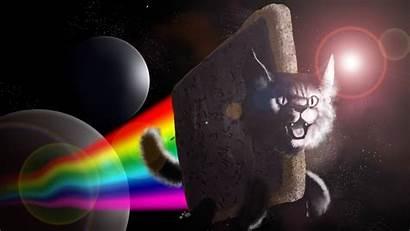 Meme Wallpapers Desktop Wallpapersafari Cat Backgrounds