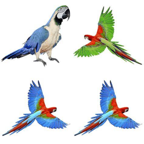 parrots transparent png images stickpng