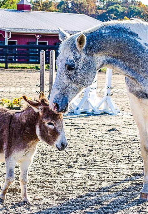 horses donkeys companions donkey horse companion animals many different