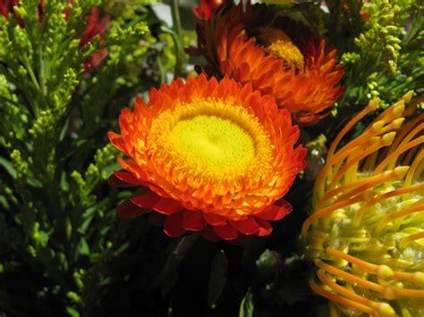 winter bloemen australie native australian flowers graham miln