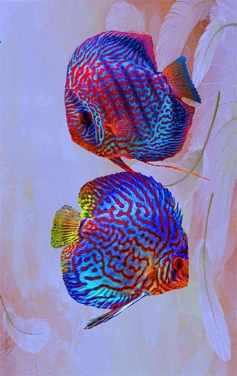 small freshwater aquarium fish aquarium design ideas