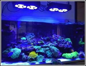 Aquarium Led Beleuchtung : aquarium led beleuchtung selber machen beleuchthung house und dekor galerie l8zbv53zm7 ~ Frokenaadalensverden.com Haus und Dekorationen