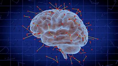 Brain Chemical Alcohol Chemistry Norepinephrine Cells Promotes