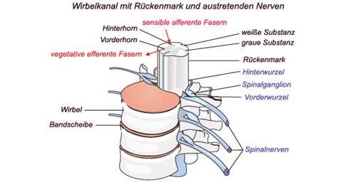osteochondrose lws l5 s1