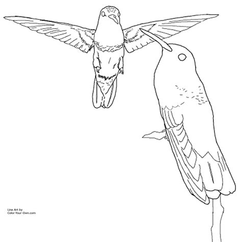 Rio Birds Coloring Pages Images Thecelebritypix