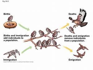 Honors Biology: Populations