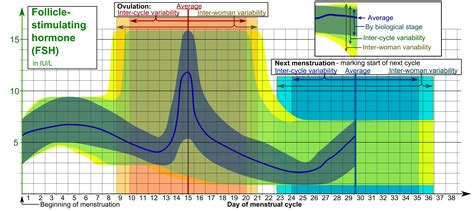 basal temperature charting sussex acupuncture
