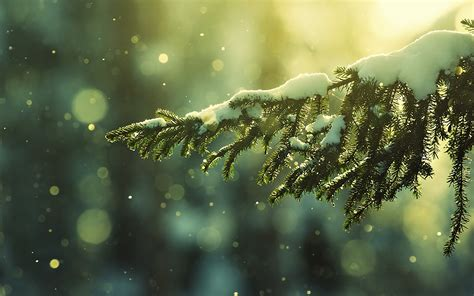 christmas snow wallpaper 496883