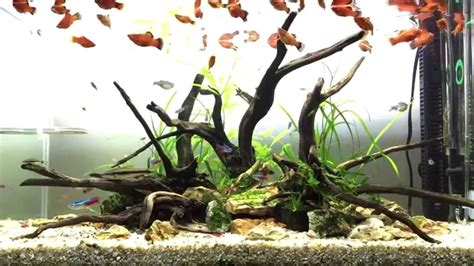 aquascaping with driftwood driftwood aquascape oct 2015