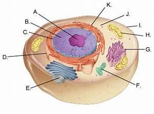 Bio 341 Study Guide  2013-14 Vaughn