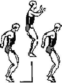 Réflexe Myotatique Et Tonus Musculaire