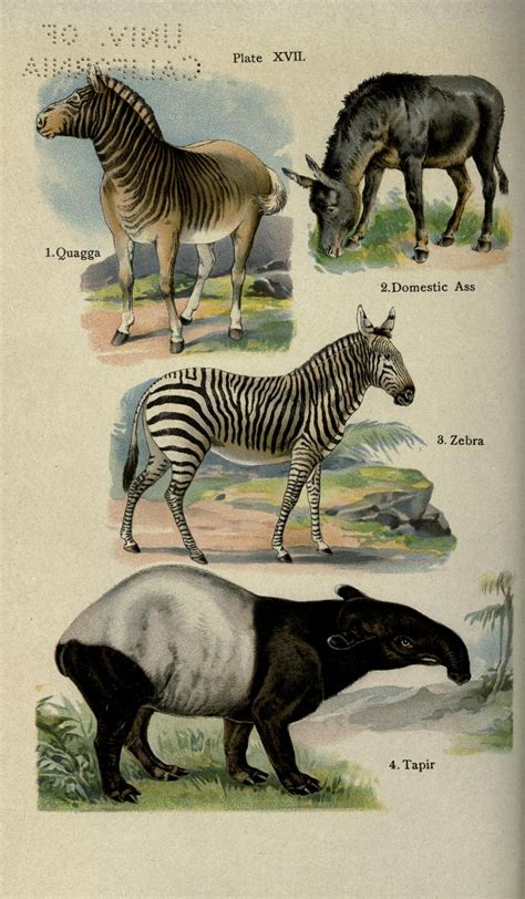 handy natural history biodiversity heritage library