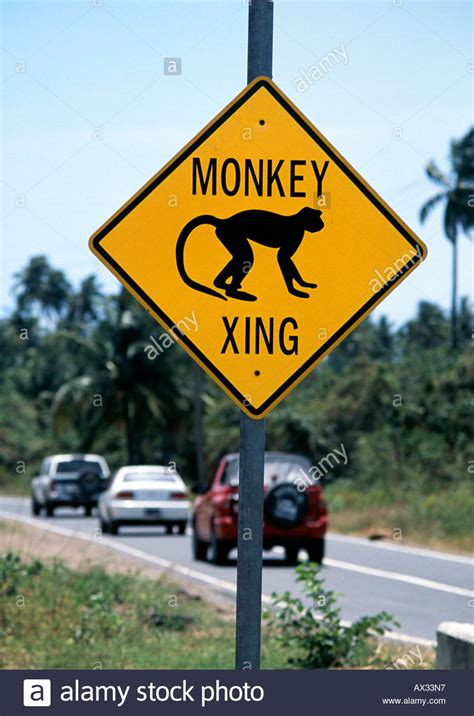 Monkey Warning ! Unusual Road Signs In Nevis Caribbean. Role Signs. Caution Sign Signs Of Stroke. Back Neck Signs. Kickball Logo. October Lettering. Minimalist Stickers. Nail Signs Of Stroke. Invitation Banners