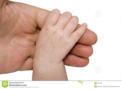 baby hand  parent arm stock photo image