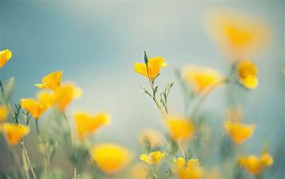 Yellow Flowers Wallpapers Backgrounds