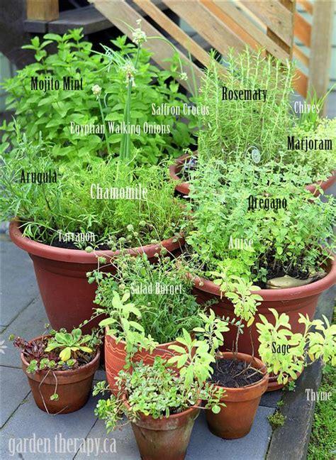 grow   perennial herb container garden garden therapy