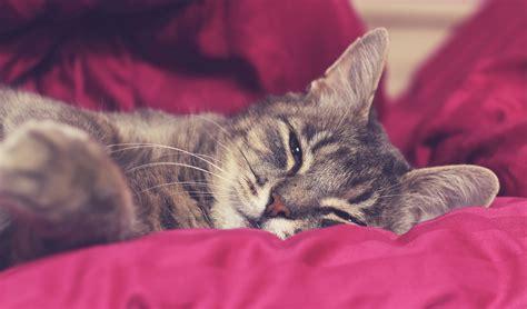 cat calming cats aids natural