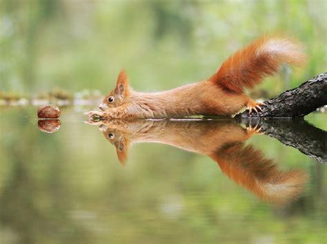 amusing wildlife   award winning austrian