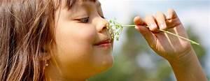 Making Sense Of Smell