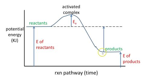 # 5 Potential Energy Diagram Exothermic Rxn Youtube