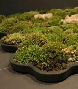La Boite A Tapis : mousse v g tale id es pour faire entrer la nature dans ~ Dailycaller-alerts.com Idées de Décoration