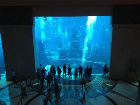dubai hotel aquarium atlantis aquarium picture of atlantis the palm dubai tripadvisor
