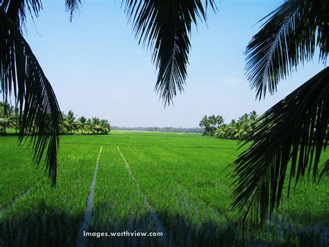 green village vari andhra images worthview