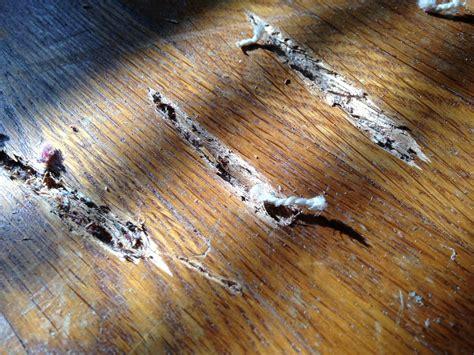 Wood Floor Techniques 101