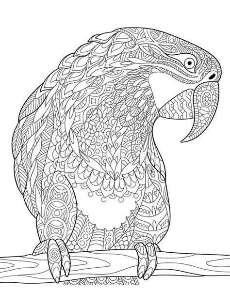 parrot coloring pages  adults printable   easy coloring pages