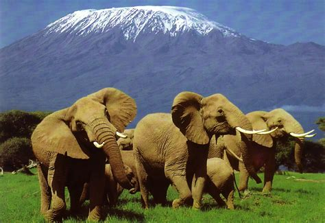 Best Safaris In Kenya Kenya Best Destinations For Thrill Seekers