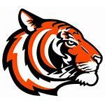 Orange Tigers Archer Clip Clipart Vector Clker