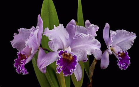 strauch mit weißen blüten die 62 besten orchideen hintergrundbilder