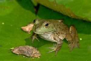 What Do Frogs Eat? The Answer Might Make Your Eyes Boggle ...