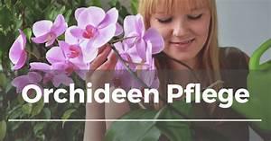 Luftwurzeln Bei Orchideen : orchideen pflege garten schule ~ Frokenaadalensverden.com Haus und Dekorationen