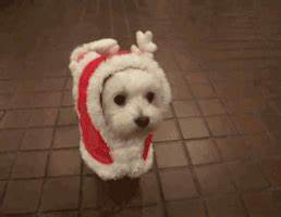 Cute Animated Dog GIFs - Find & Share on GIPHY