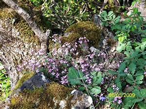 Fleur En Bois : fleur bois ~ Dallasstarsshop.com Idées de Décoration