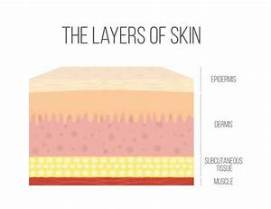 Best Human Skin Illustrations  Royalty