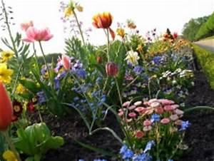 Balkonblumen Richtig Pflanzen : blumenbeet richtig anlegen gestaltung und bepflanzung ~ Frokenaadalensverden.com Haus und Dekorationen