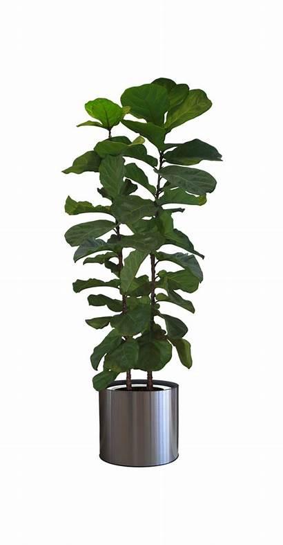 Plant Potted Transparent Plants Clipart Indoor Pot
