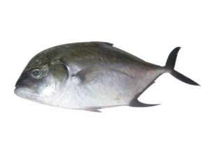 daily english fish names  english  tamil