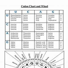 Nucleic Acids Review Worksheet  Biology With Mrs Sims At