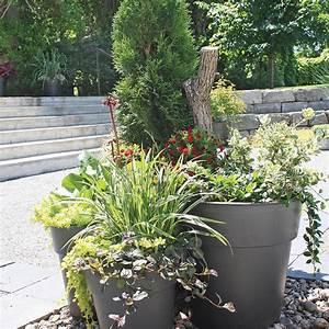 Arbuste Persistant En Pot : arbuste en pot exterieur homeezy ~ Premium-room.com Idées de Décoration