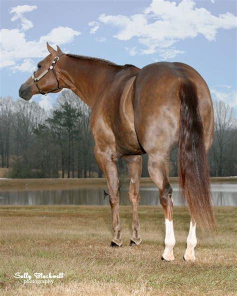 quarter horse horses tall american reality bar cool western glowing aqha sorrel gelding 2007