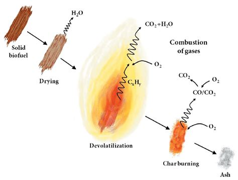 stages  combustion   solid biomass particle