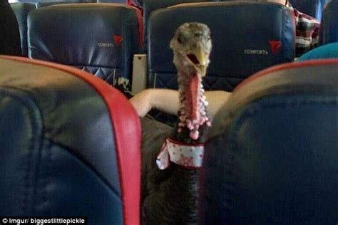 'Emotional support animals' including turkeys and pigs