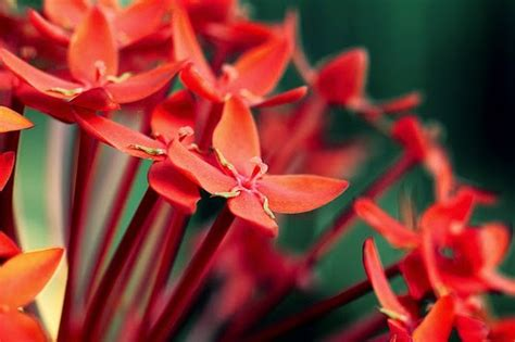 merindukan bunga asoka backpackeria