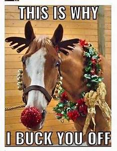 485 best Horsey... Funny Christmas Horse Quotes