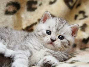 Really Super Cute Fluffy Kittens!   My Cute Kitten ...